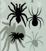 多种蜘蛛形状