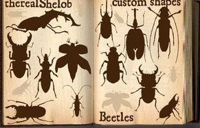 多种甲虫形状