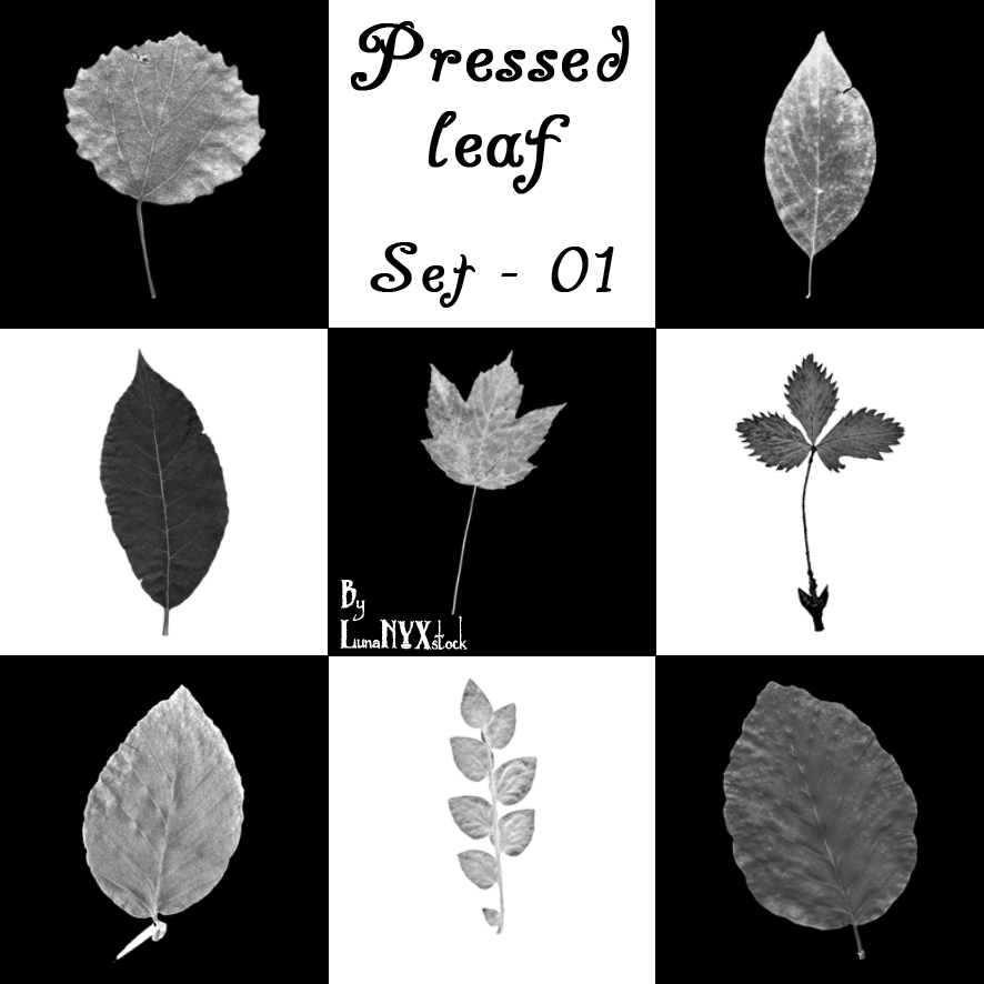 落叶、叶子、枫叶Photoshop枯叶造型笔刷素材